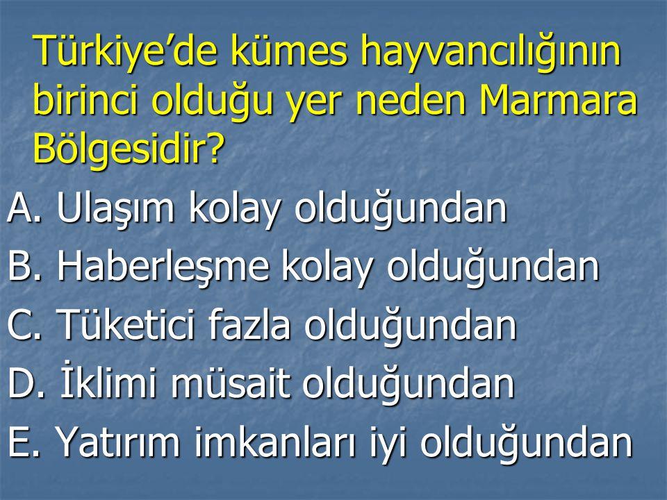 Türkiye'de kümes hayvancılığının birinci olduğu yer neden Marmara Bölgesidir? Türkiye'de kümes hayvancılığının birinci olduğu yer neden Marmara Bölges