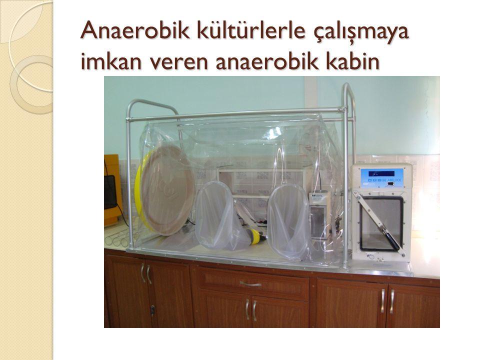Anaerobik kültürlerle çalışmaya imkan veren anaerobik kabin