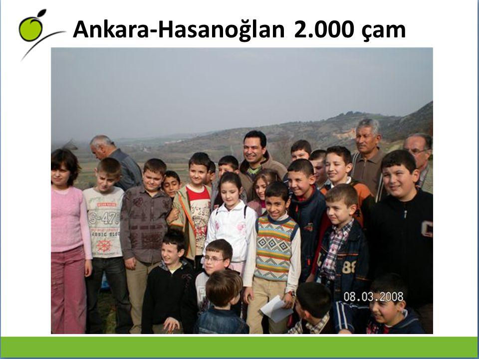 Ankara-Hasanoğlan 2.000 çam