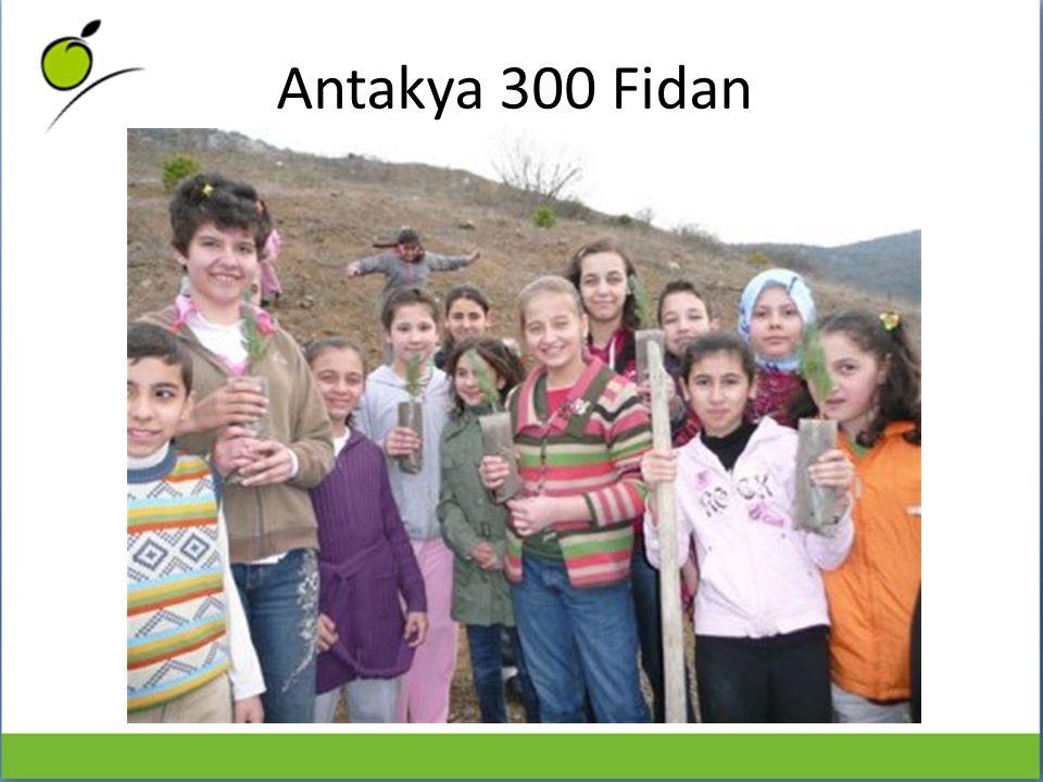 Bilgi Festivali Katılımcıları Adına 5 Çam Fidanı