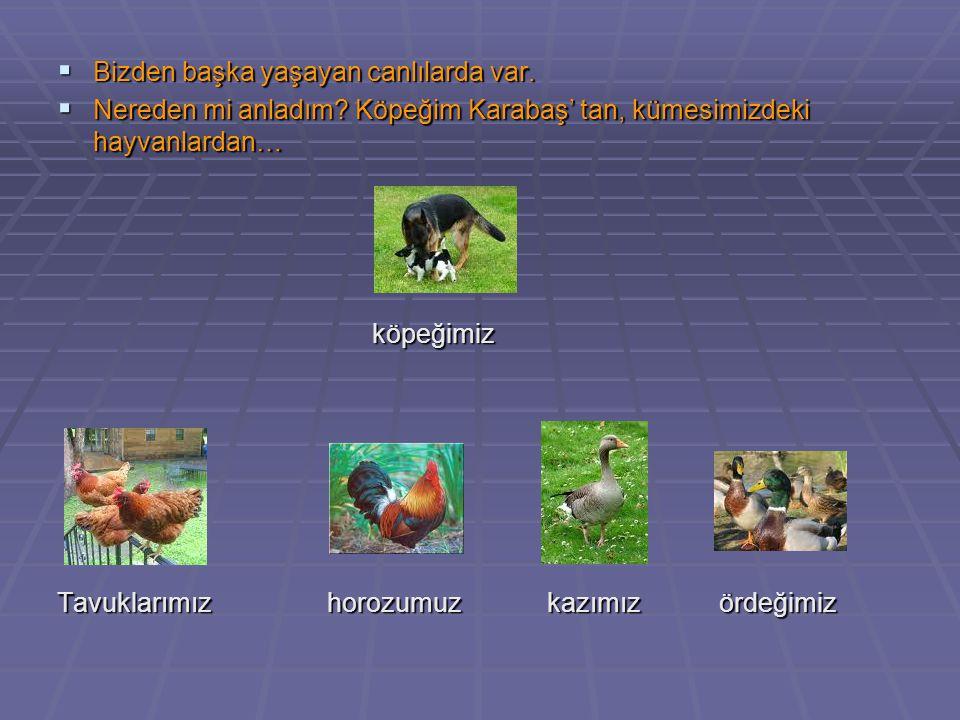 Bizden başka yaşayan canlılarda var.  Nereden mi anladım? Köpeğim Karabaş' tan, kümesimizdeki hayvanlardan… köpeğimiz köpeğimiz Tavuklarımız horozu
