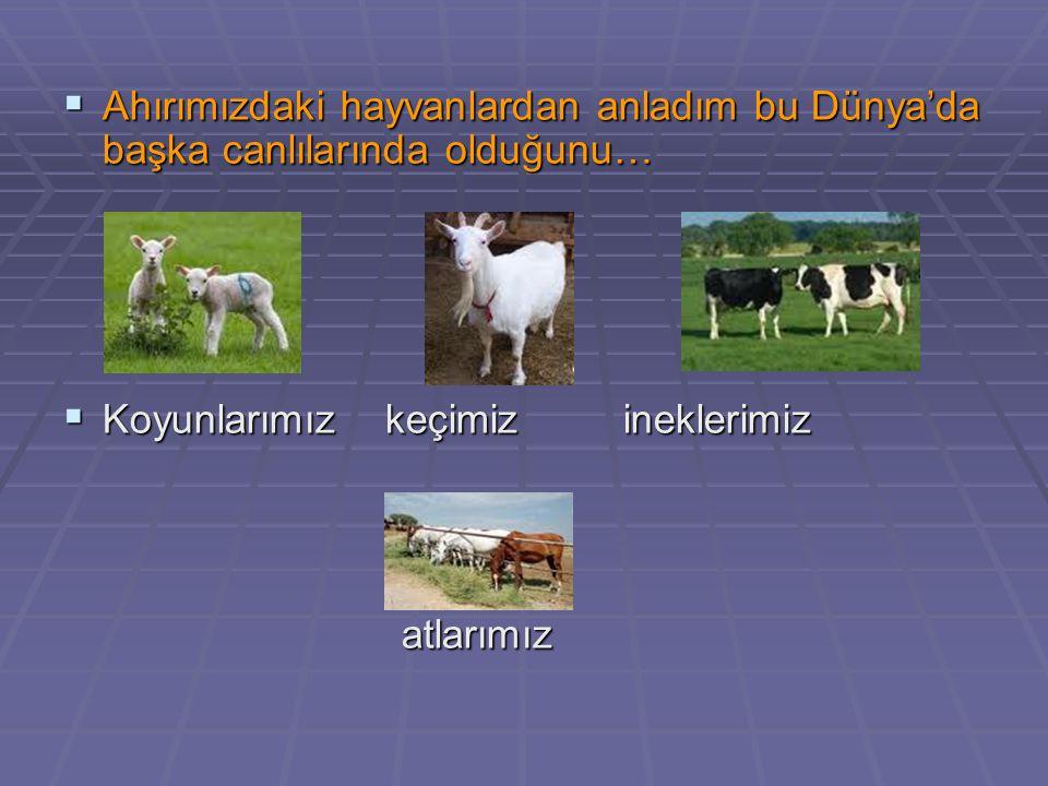  Ahırımızdaki hayvanlardan anladım bu Dünya'da başka canlılarında olduğunu…  Koyunlarımız keçimiz ineklerimiz atlarımız atlarımız