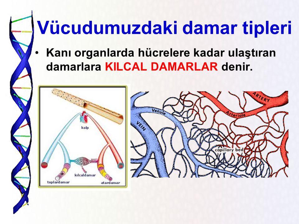 Vücudumuzdaki damar tipleri Kanı vücuttan toplayıp kalbe getiren damarlara TOPLARDAMAR denir.