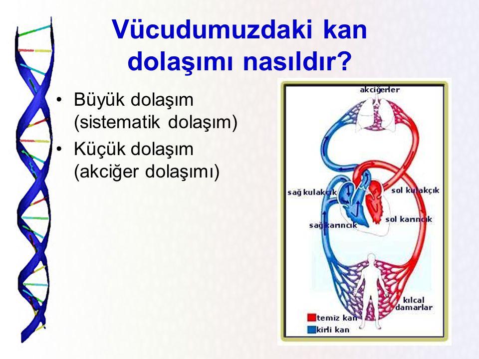 Vücudumuzdaki damar tipleri Kanı organlarda hücrelere kadar ulaştıran damarlara KILCAL DAMARLAR denir.