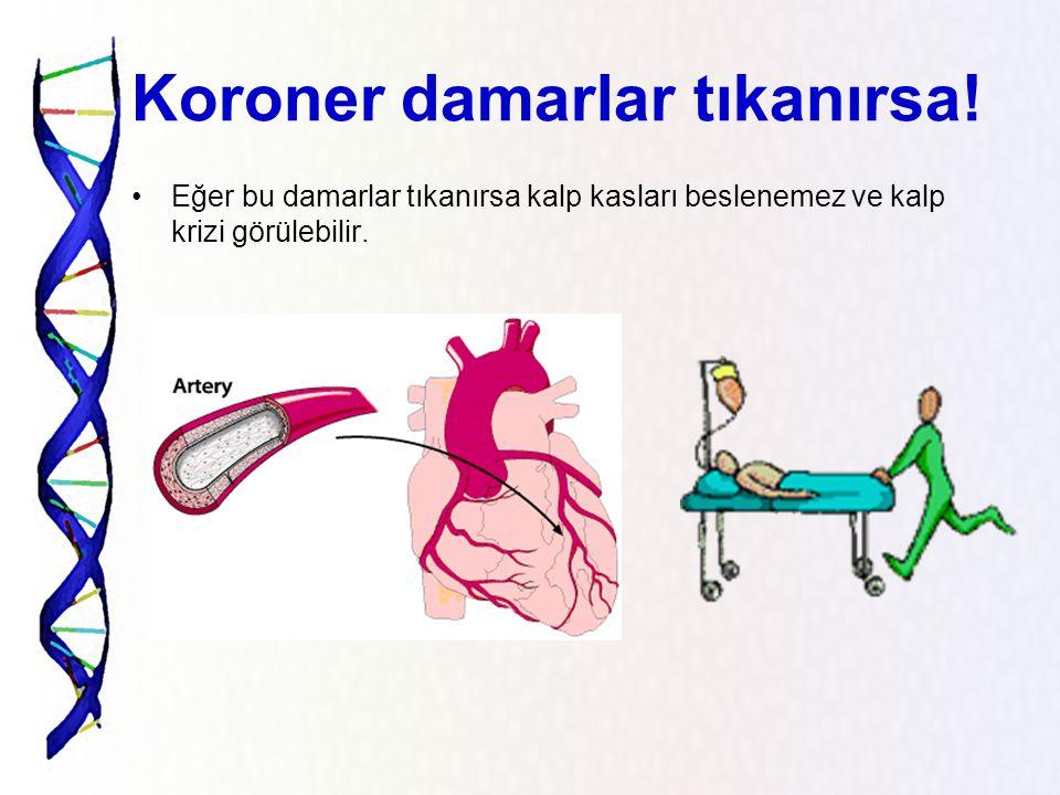 Kalbin bölümleri Kalp dört odacıktan meydana gelir. Üst odacıklara kulakçık,alt odacıklara karıncık adı verilir.Kulakçıklar ile karıncıklar arasında k