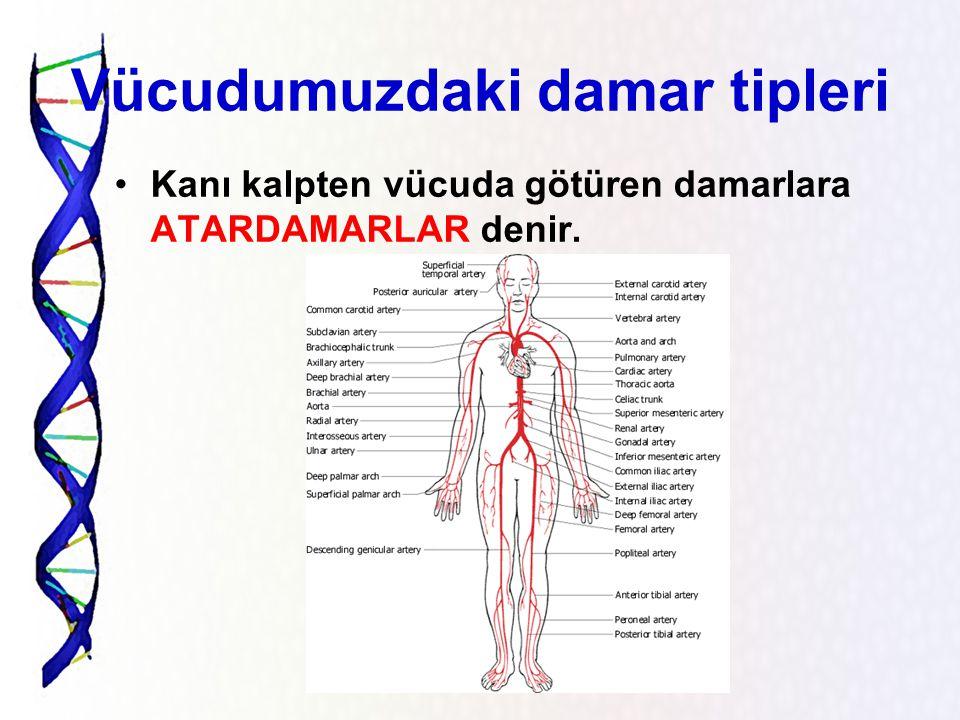 Damarlar Kalbin pompaladığı kan, vücudumuzda damarlar yoluyla dolaşır. Damarları evimizdeki su tesisatına benzetebiliriz. Tesisatın içindeki borularda
