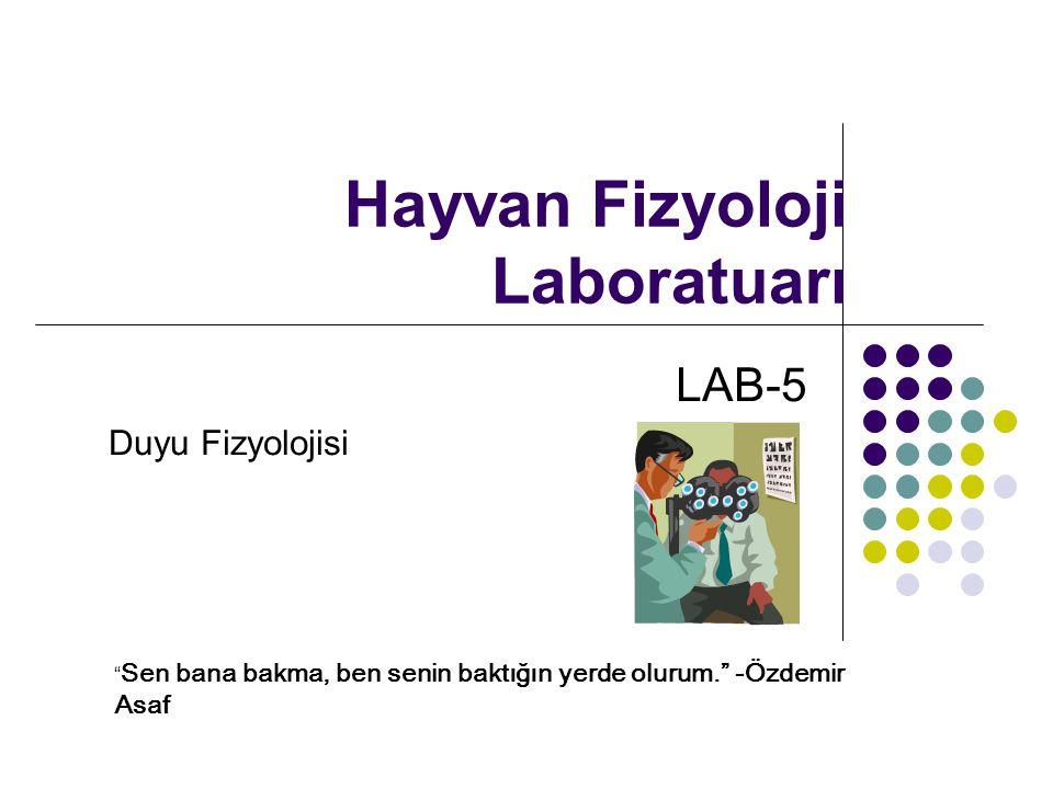 Hayvan Fizyoloji Laboratuarı LAB-5 Duyu Fizyolojisi Sen bana bakma, ben senin baktığın yerde olurum. -Özdemir Asaf