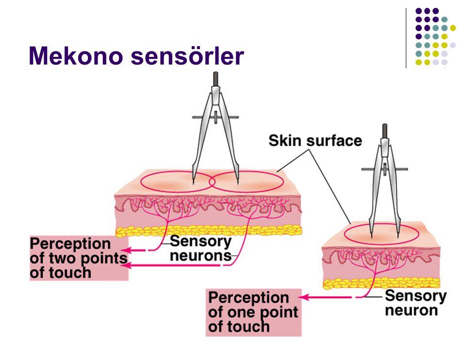 Mekono sensörler