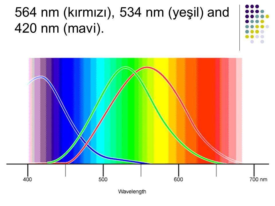 564 nm (kırmızı), 534 nm (yeşil) and 420 nm (mavi).