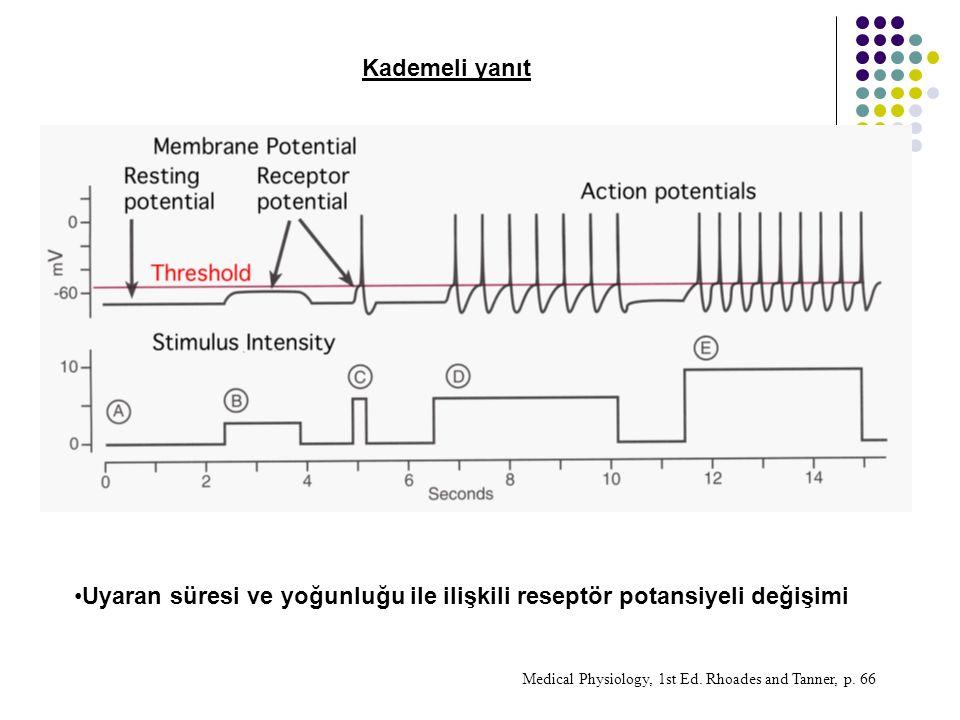 Kademeli yanıt Uyaran süresi ve yoğunluğu ile ilişkili reseptör potansiyeli değişimi Medical Physiology, 1st Ed.