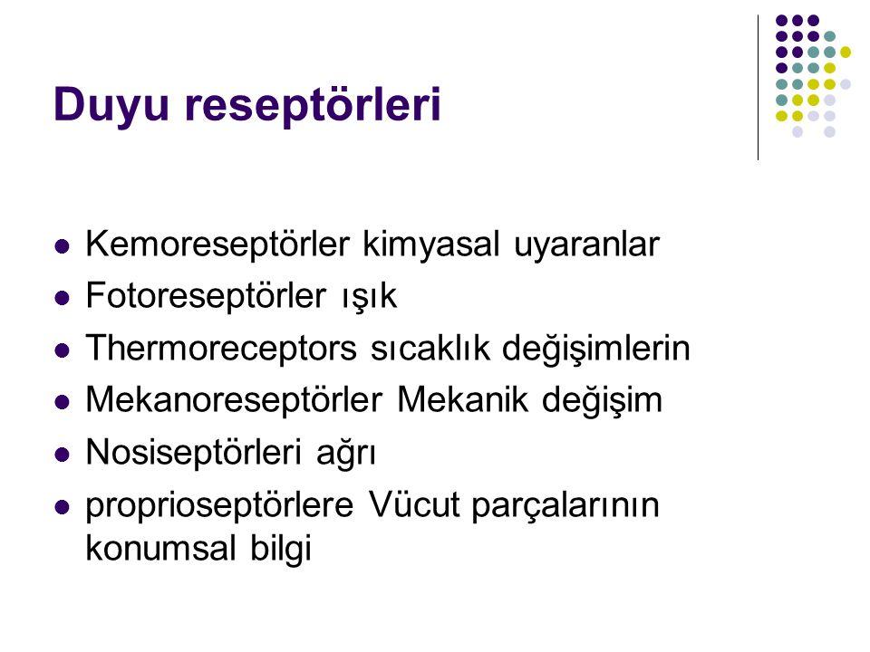 Reseptör Reseptörler uyaran konuma göre Exteroceptors Enteroceptors = Visceroceptors Proprioseptörlere Uyarılma Türüne Göre Reseptörler mekanoreseptörler Thermoreceptors Kemoreseptörler fotoreseptörler Nosiseptörleri (ağrı)
