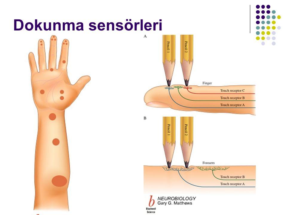 Dokunma sensörleri