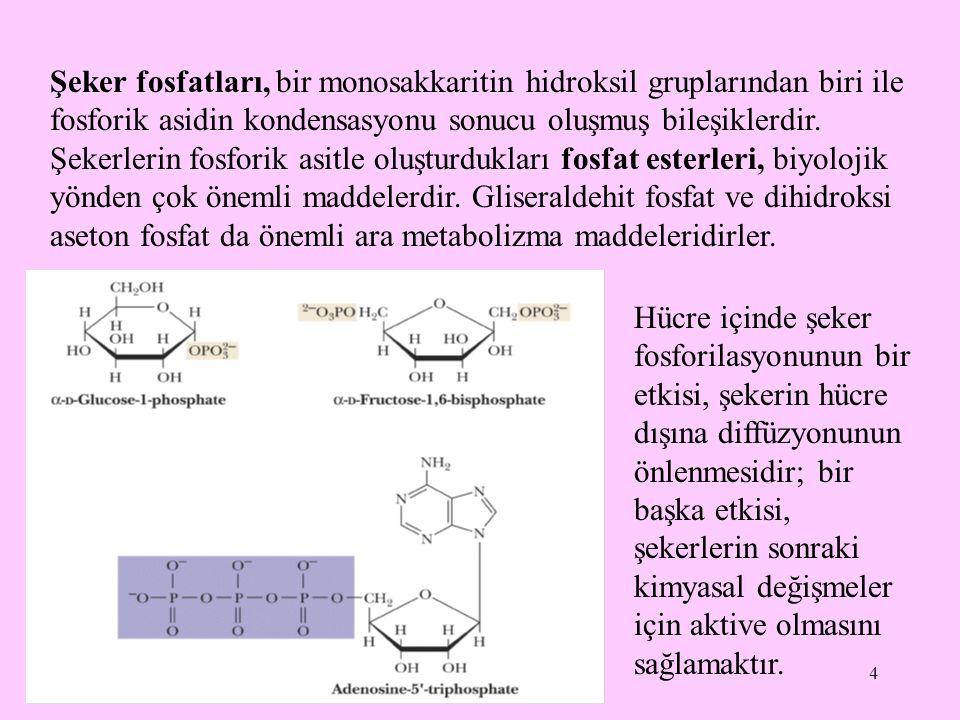 4 Şeker fosfatları, bir monosakkaritin hidroksil gruplarından biri ile fosforik asidin kondensasyonu sonucu oluşmuş bileşiklerdir. Şekerlerin fosforik