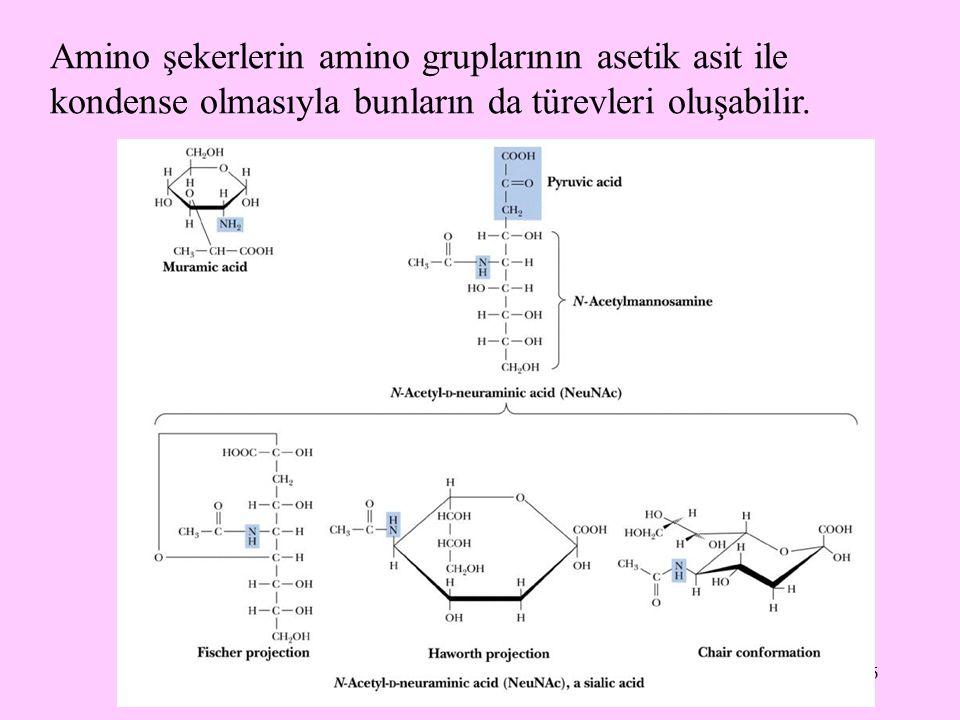 6 Amino şekerlerin amino gruplarının asetik asit ile kondense olmasıyla bunların da türevleri oluşabilir.
