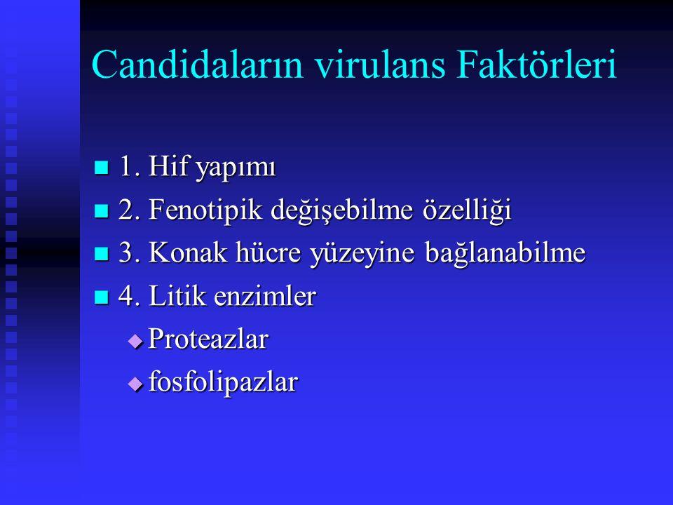 Candidaların virulans Faktörleri 1. Hif yapımı 1. Hif yapımı 2. Fenotipik değişebilme özelliği 2. Fenotipik değişebilme özelliği 3. Konak hücre yüzeyi