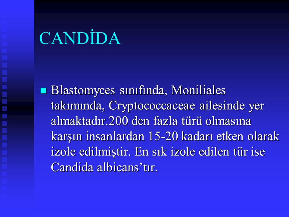 CANDİDA Blastomyces sınıfında, Moniliales takımında, Cryptococcaceae ailesinde yer almaktadır.200 den fazla türü olmasına karşın insanlardan 15-20 kad
