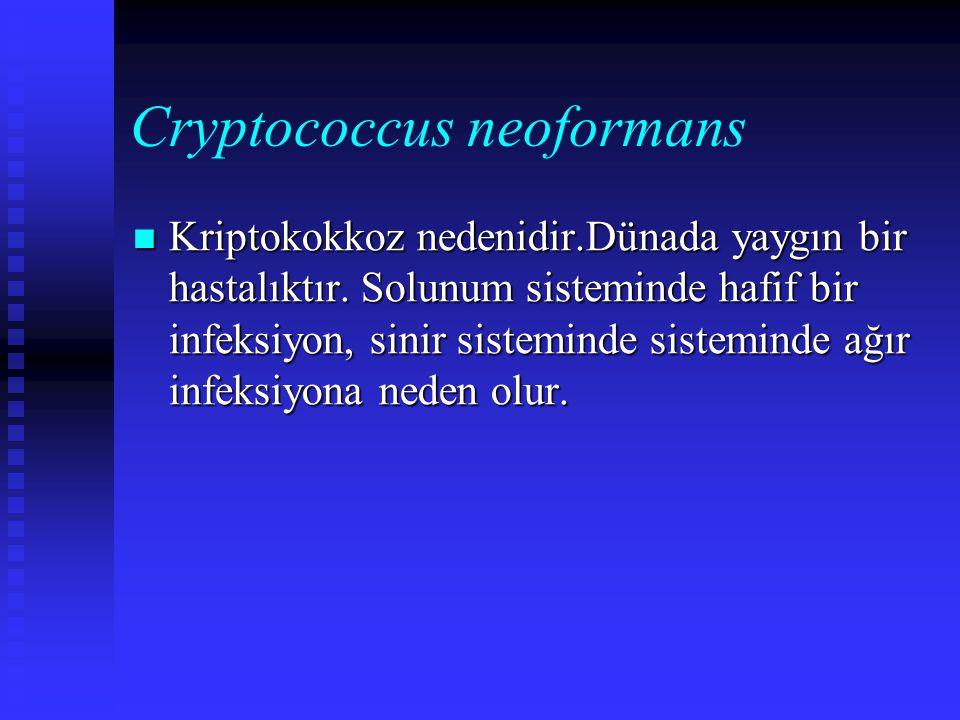 Cryptococcus neoformans Kriptokokkoz nedenidir.Dünada yaygın bir hastalıktır. Solunum sisteminde hafif bir infeksiyon, sinir sisteminde sisteminde ağı