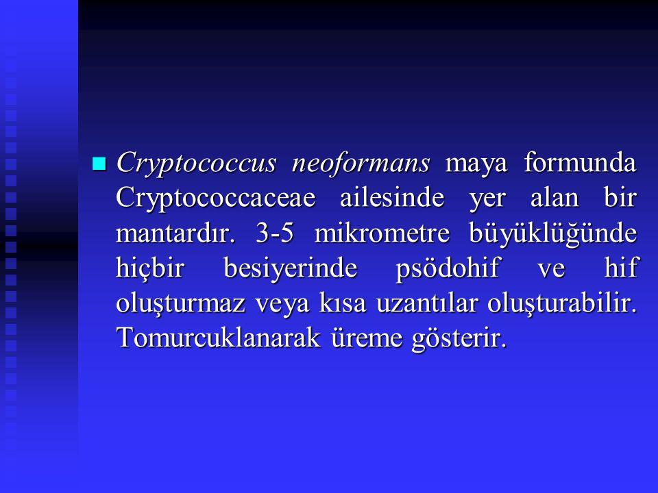Cryptococcus neoformans maya formunda Cryptococcaceae ailesinde yer alan bir mantardır. 3-5 mikrometre büyüklüğünde hiçbir besiyerinde psödohif ve hif