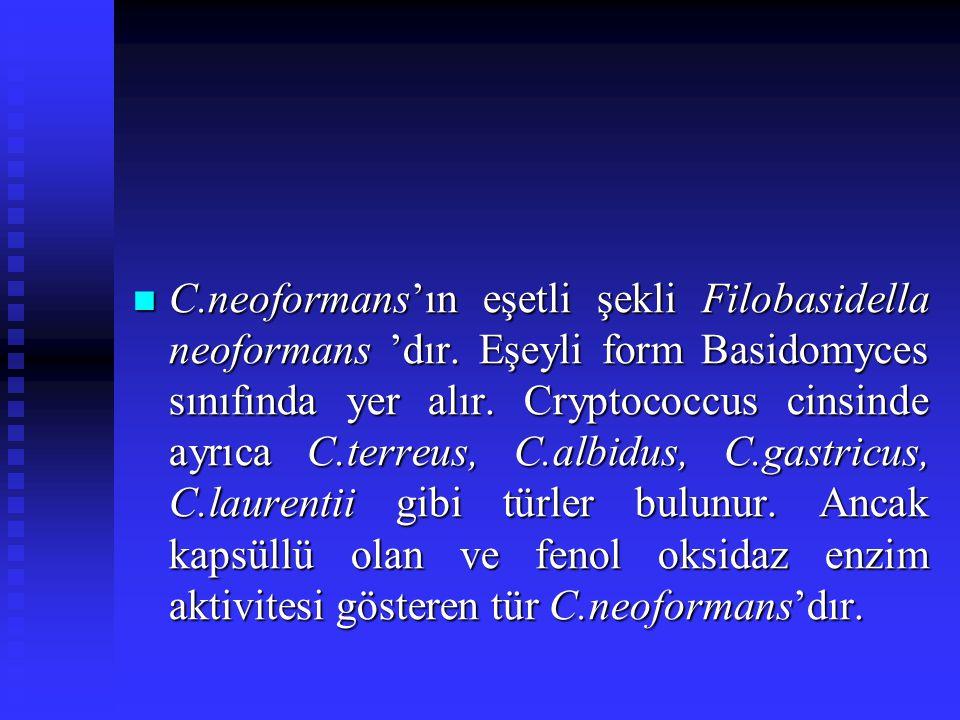 C.neoformans'ın eşetli şekli Filobasidella neoformans 'dır. Eşeyli form Basidomyces sınıfında yer alır. Cryptococcus cinsinde ayrıca C.terreus, C.albi