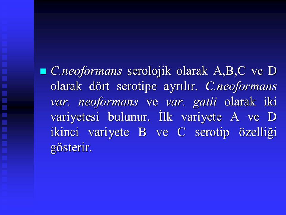 C.neoformans serolojik olarak A,B,C ve D olarak dört serotipe ayrılır. C.neoformans var. neoformans ve var. gatii olarak iki variyetesi bulunur. İlk v