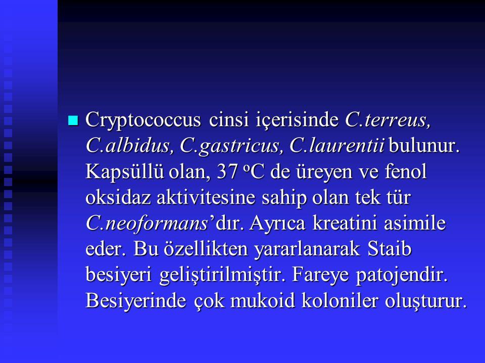 Cryptococcus cinsi içerisinde C.terreus, C.albidus, C.gastricus, C.laurentii bulunur. Kapsüllü olan, 37 o C de üreyen ve fenol oksidaz aktivitesine sa
