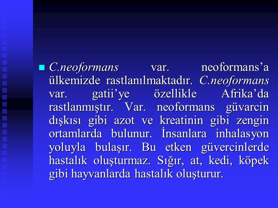 C.neoformans var. neoformans'a ülkemizde rastlanılmaktadır. C.neoformans var. gatii'ye özellikle Afrika'da rastlanmıştır. Var. neoformans güvarcin dış