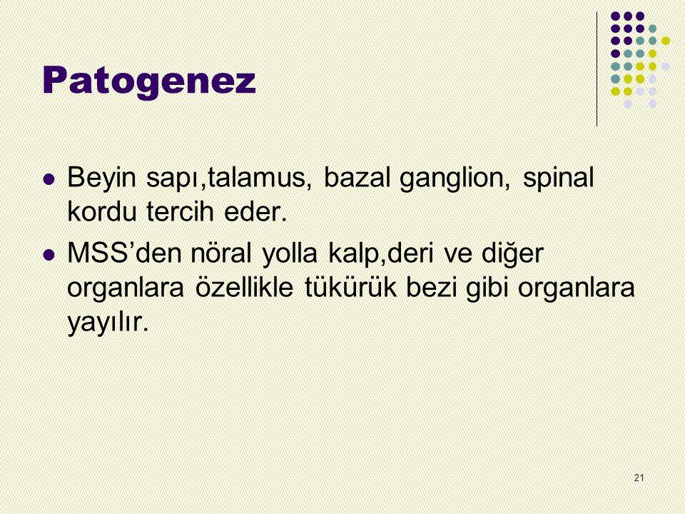 Patogenez Beyin sapı,talamus, bazal ganglion, spinal kordu tercih eder.
