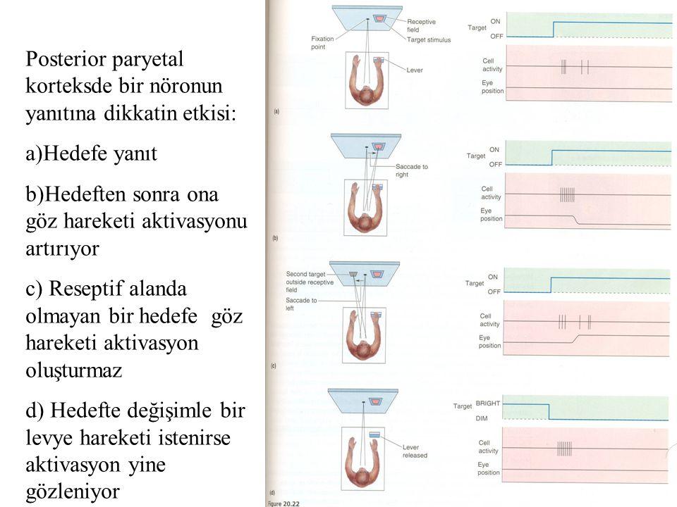 Posterior paryetal korteksde bir nöronun yanıtına dikkatin etkisi: a)Hedefe yanıt b)Hedeften sonra ona göz hareketi aktivasyonu artırıyor c) Reseptif