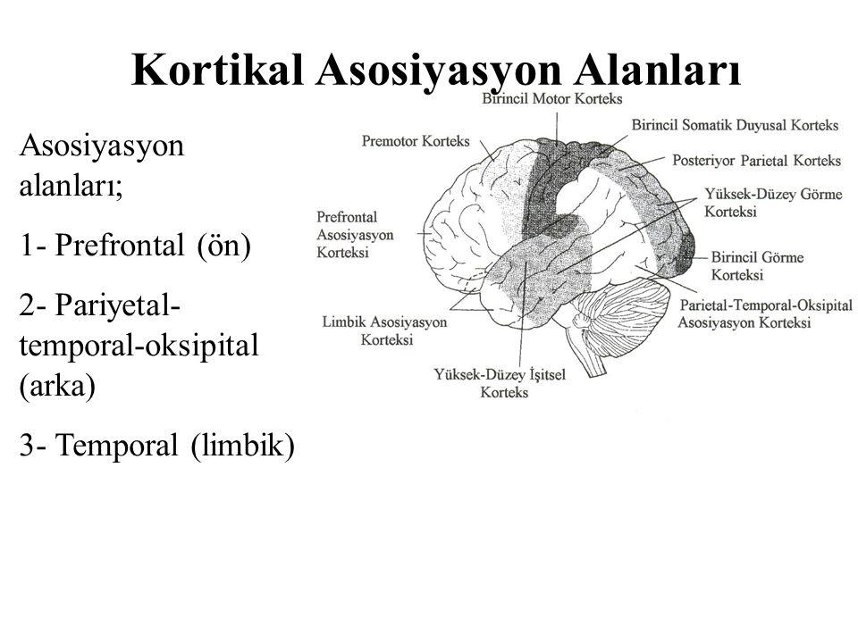 Asosiyasyon alanları; 1- Prefrontal (ön) 2- Pariyetal- temporal-oksipital (arka) 3- Temporal (limbik) Kortikal Asosiyasyon Alanları