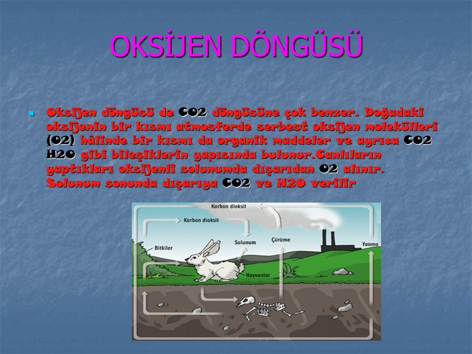 KARBON DÖNGÜSÜ Karbon doğada hem mineral biçiminde (kömür, elmas, gaz olarak veya suda çözünmüş durumda karbon dioksit olarak) hem organik biçimde bul