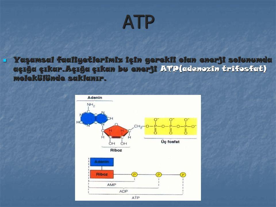 AZOT DÖNGÜSÜ Azot canlılar için temel elementlerdendir. Proteinlerin önemli bölümlerini oluşturur, proteinler hücre yapısının temel yapı taşıdır.Önce