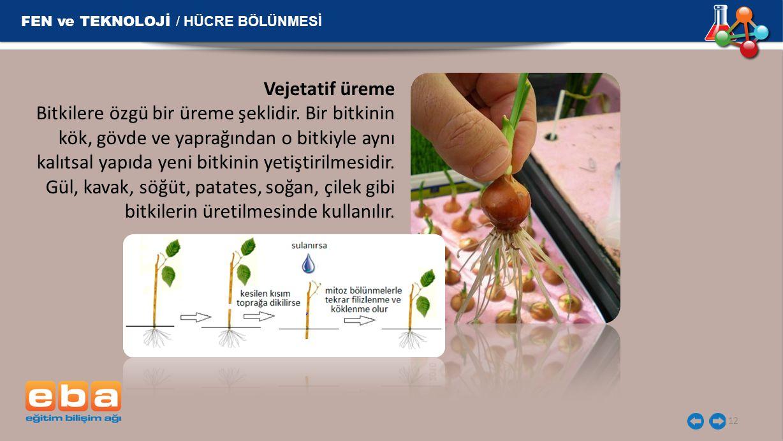 12 FEN ve TEKNOLOJİ / HÜCRE BÖLÜNMESİ Vejetatif üreme Bitkilere özgü bir üreme şeklidir. Bir bitkinin kök, gövde ve yaprağından o bitkiyle aynı kalıts