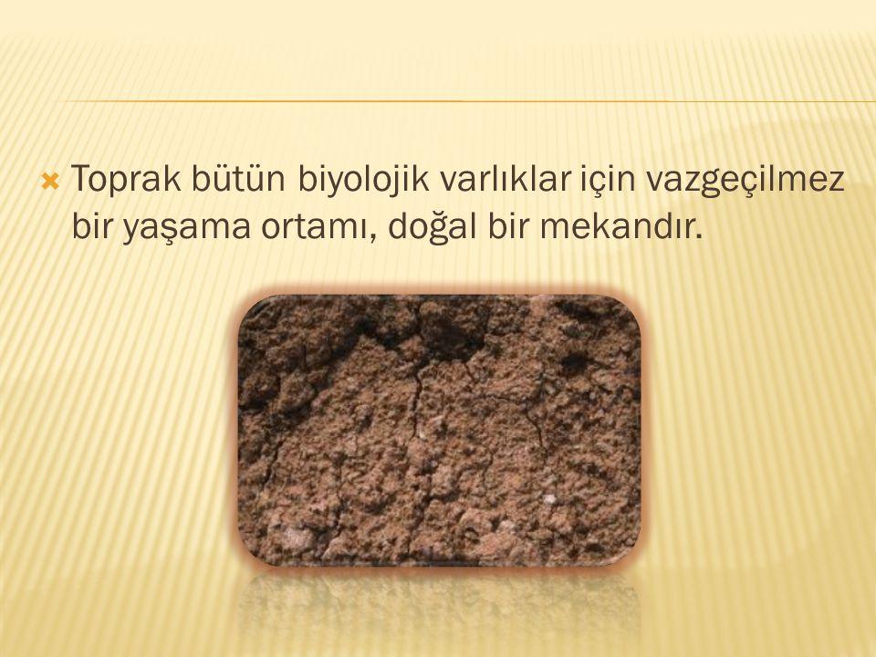  Toprak bütün biyolojik varlıklar için vazgeçilmez bir yaşama ortamı, doğal bir mekandır.