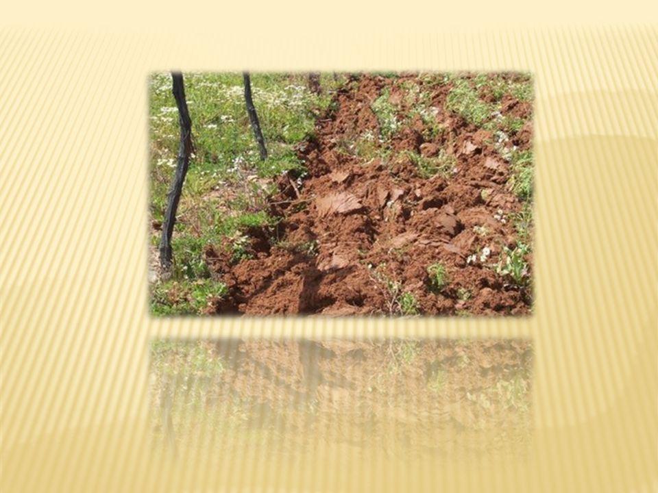  Toprak insanların yaşamında çok önemlidir.