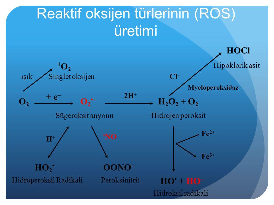 Reaktif oksijen türlerinin (ROS) üretimi O2O2 O2–O2– + e – H 2 O 2 + O 2 2H + Süperoksit anyonuHidrojen peroksit Hidroperoksil Radikali HO 2 H+H+ Hidroksil radikali OONO – NO Peroksinitrit 1O21O2 ışık HO + HO – Fe 2+ Fe 3+ Cl – Myeloperoksidaz HOCl Hipoklorik asit Singlet oksijen