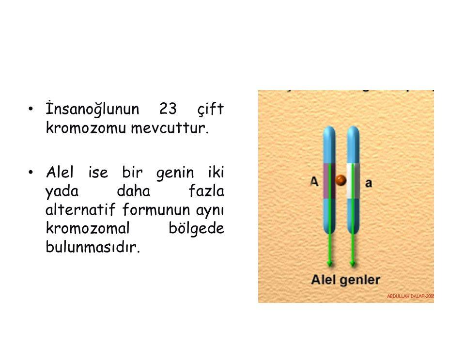 İnsanoğlunun 23 çift kromozomu mevcuttur.