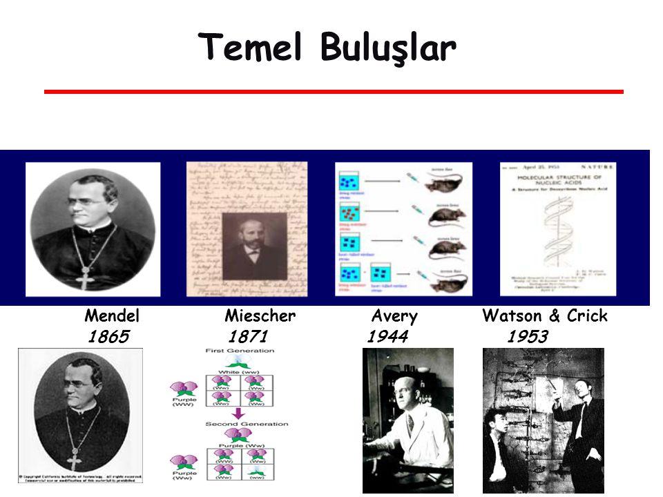 Temel Buluşlar Mendel Miescher Avery Watson & Crick 1865 1871 1944 1953