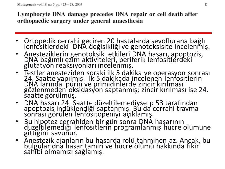 Ortopedik cerrahi geçiren 20 hastalarda sevoflurana bağlı lenfositlerdeki DNA değişikliği ve genotoksisite incelenmiş.