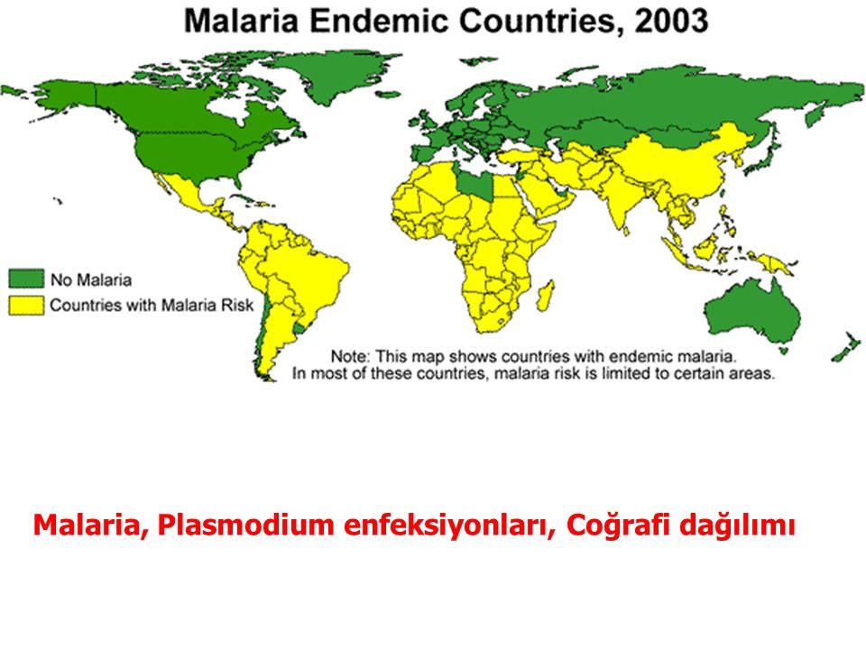 Malaria, Plasmodium enfeksiyonları, Coğrafi dağılımı