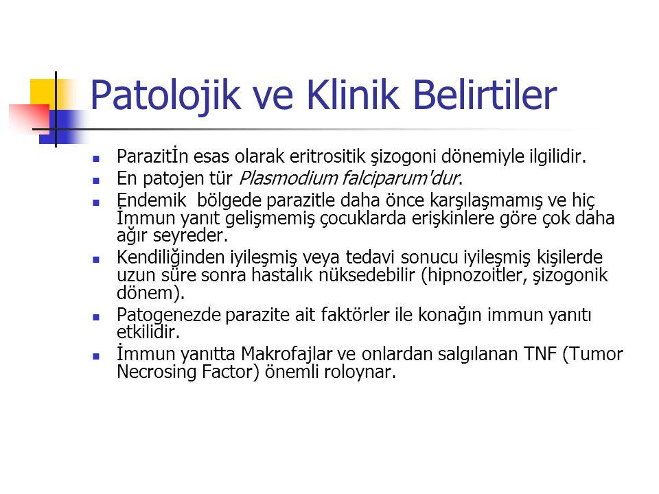 Patolojik ve Klinik Belirtiler Parazitİn esas olarak eritrositik şizogoni dönemiyle ilgilidir. En patojen tür Plasmodium falciparum'dur. Endemik bölge