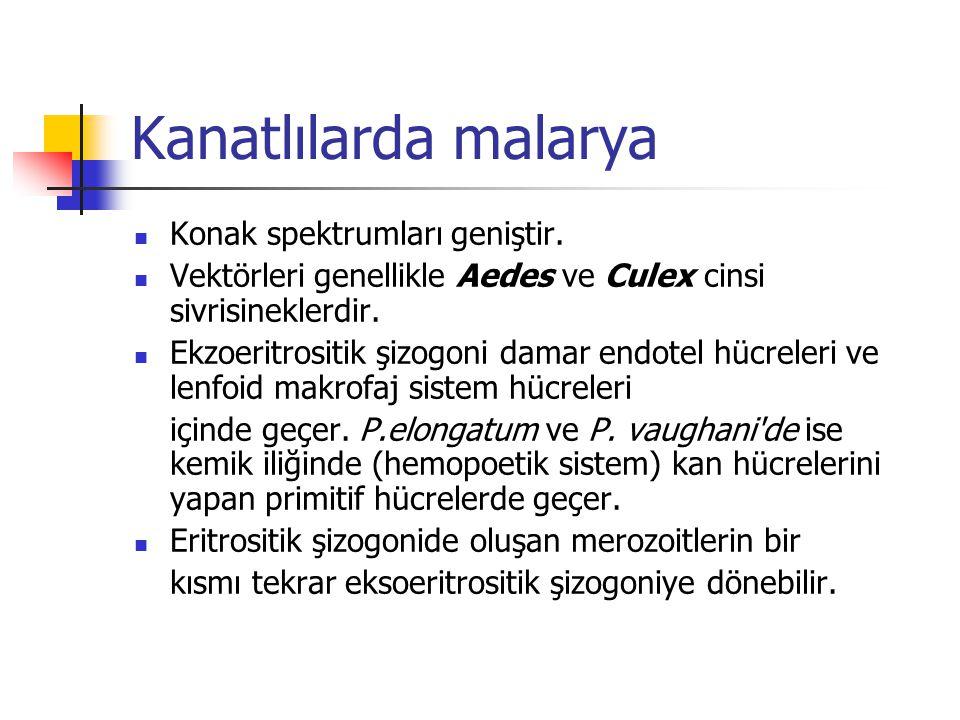 Kanatlılarda malarya Konak spektrumları geniştir. Vektörleri genellikle Aedes ve Culex cinsi sivrisineklerdir. Ekzoeritrositik şizogoni damar endotel