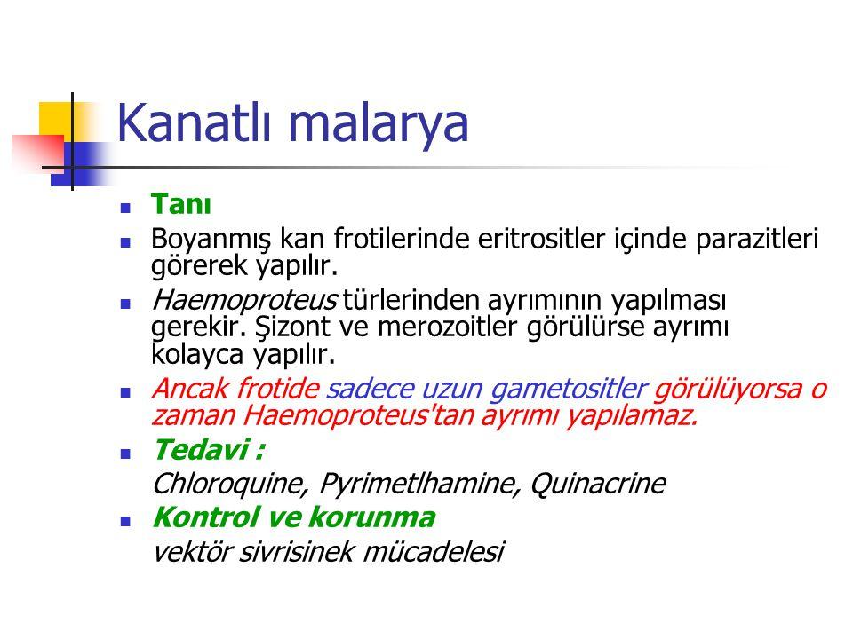 Kanatlı malarya Tanı Boyanmış kan frotilerinde eritrositler içinde parazitleri görerek yapılır.