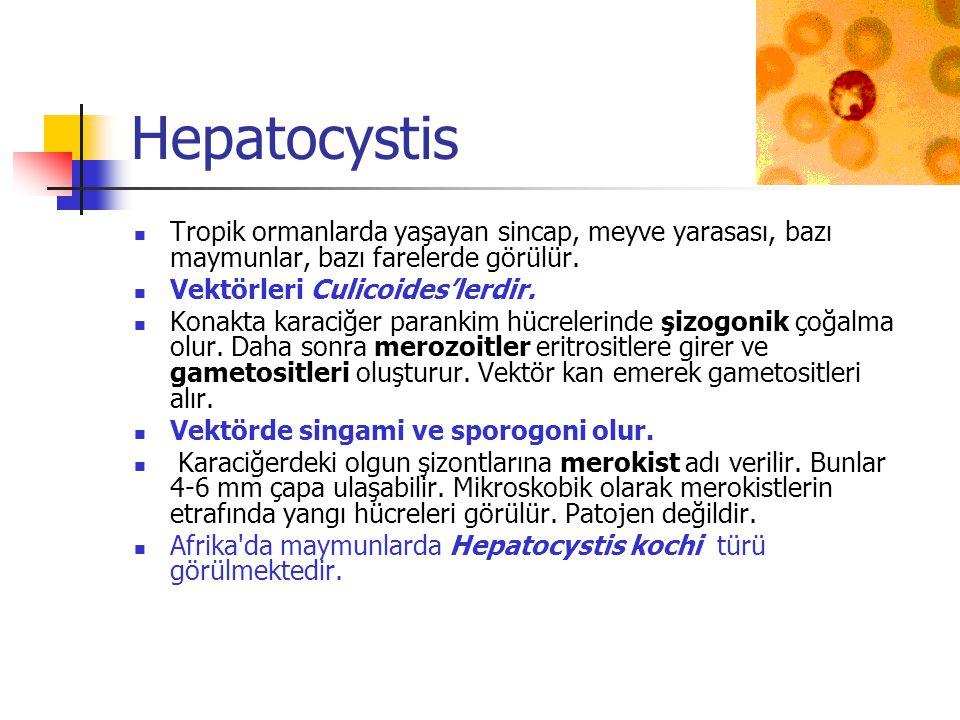 Hepatocystis Tropik ormanlarda yaşayan sincap, meyve yarasası, bazı maymunlar, bazı farelerde görülür. Vektörleri Culicoides'lerdir. Konakta karaciğer
