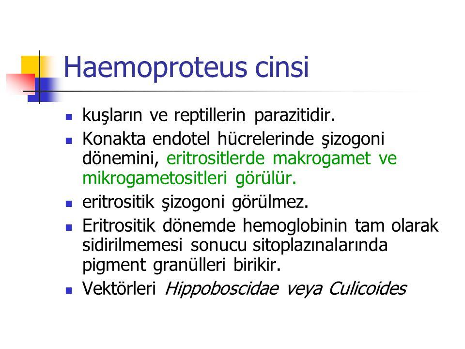 Haemoproteus cinsi kuşların ve reptillerin parazitidir.