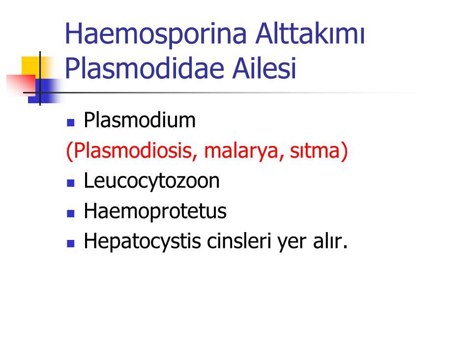 Haemosporina Alttakımı Plasmodidae Ailesi Plasmodium (Plasmodiosis, malarya, sıtma) Leucocytozoon Haemoprotetus Hepatocystis cinsleri yer alır.