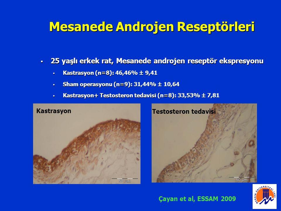 Mesanede Androjen Reseptörleri  25 yaşlı erkek rat, Mesanede androjen reseptör ekspresyonu  Kastrasyon (n=8): 46,46% ± 9,41  Sham operasyonu (n=9):