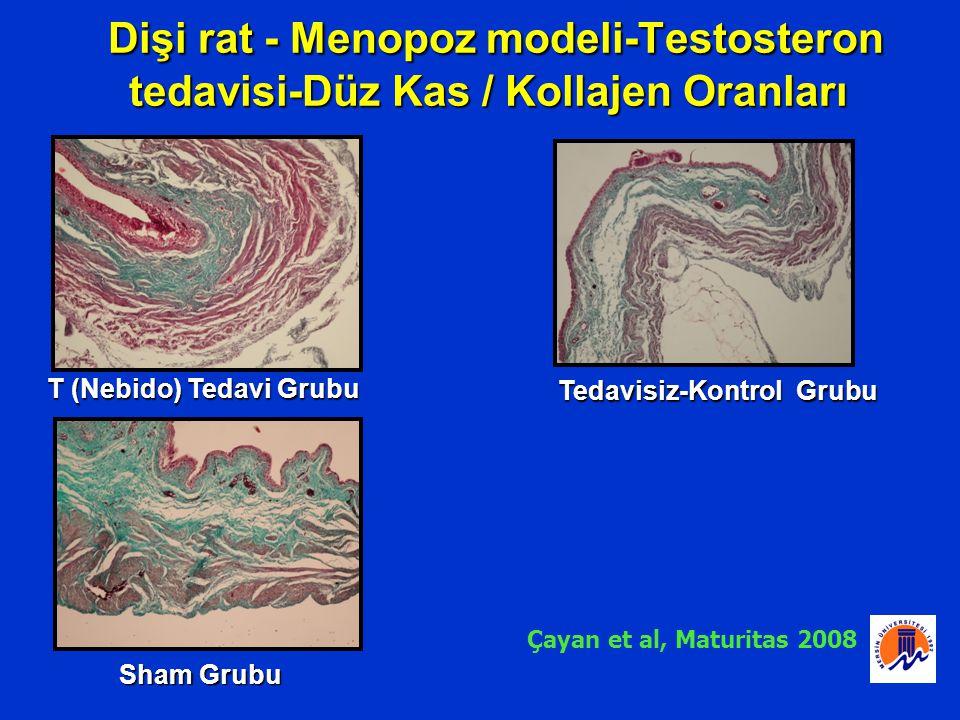 Dişi rat - Menopoz modeli-Testosteron tedavisi-Düz Kas / Kollajen Oranları Dişi rat - Menopoz modeli-Testosteron tedavisi-Düz Kas / Kollajen Oranları