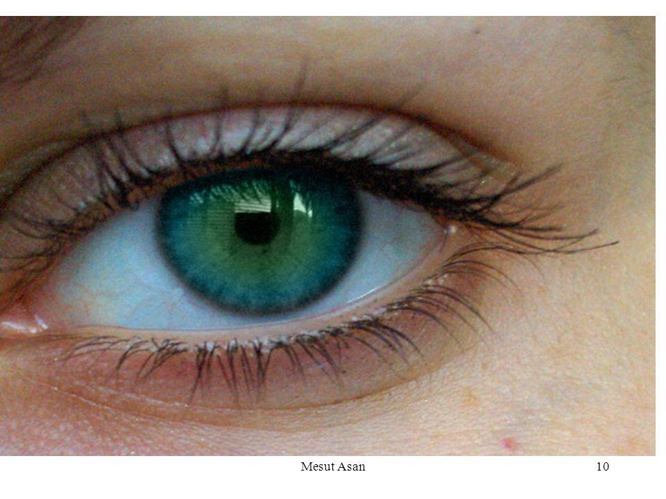 Gözlerimiz, başımızın ön tarafında, sağlam iki yuvaya yerleşmiştir.Kirpikler, kaşlar, göz kapakları ve göz yaşları gözümüzün koruyucu organlarıdır. Gö