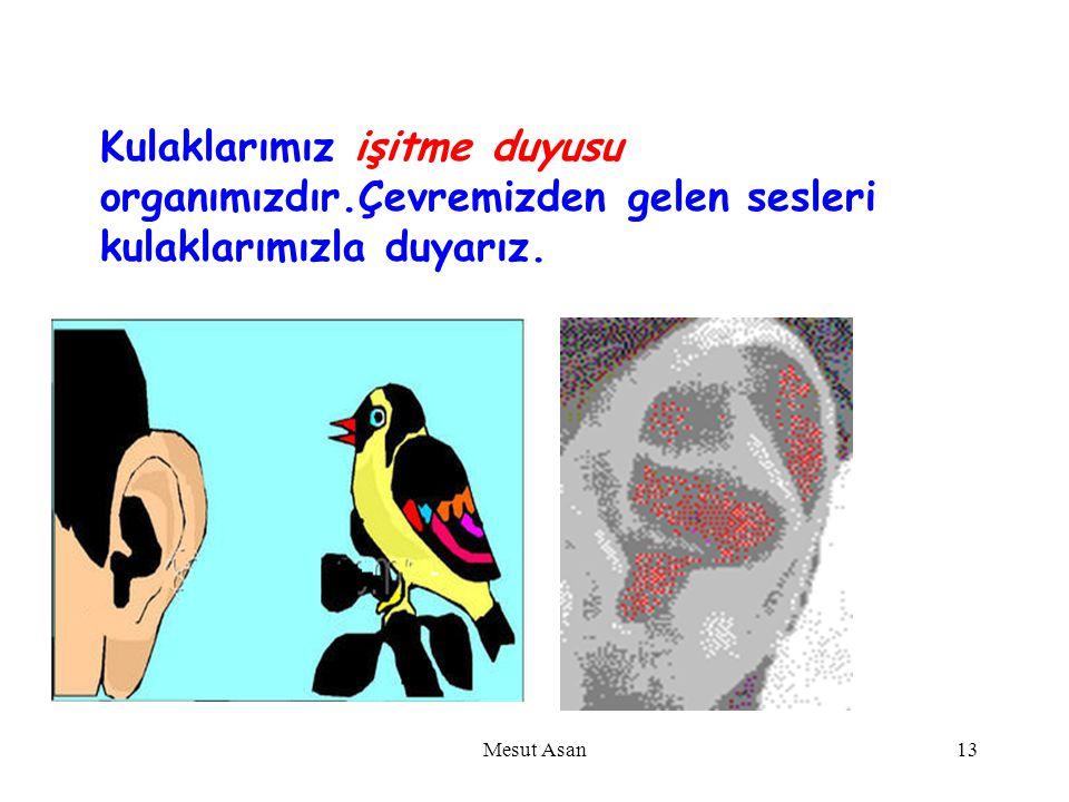KULAK Mesut Asan12