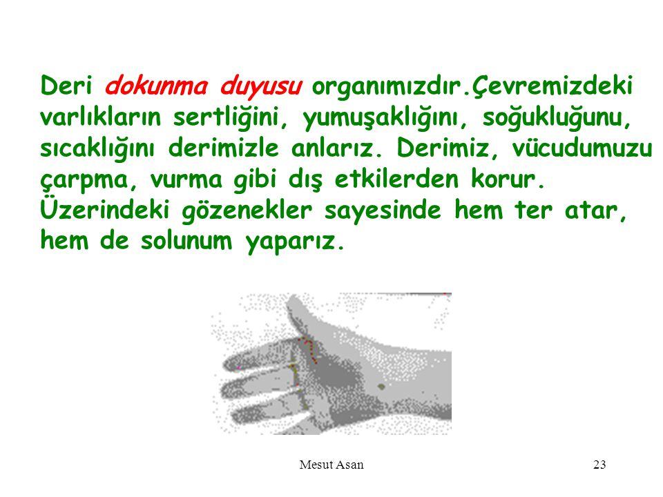 DERİ Mesut Asan22